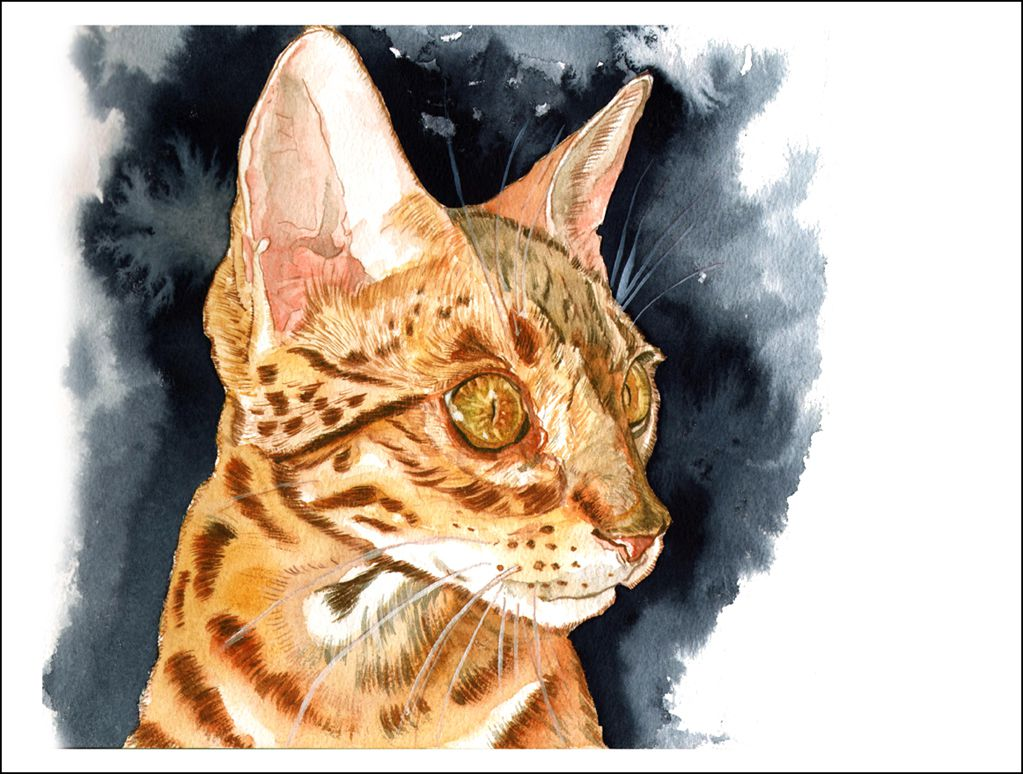 Bengal Kitten - Watercolour on Arches paper -  12' X 16' (31 cmX 41 cm)